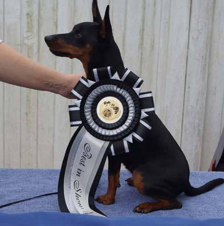 "Laila ist ""Best in Show"""