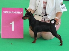 Alminoris Jolie ist World Puppy Winner! (Amsterdam 2018, Jolie ist 6 Monate alt)
